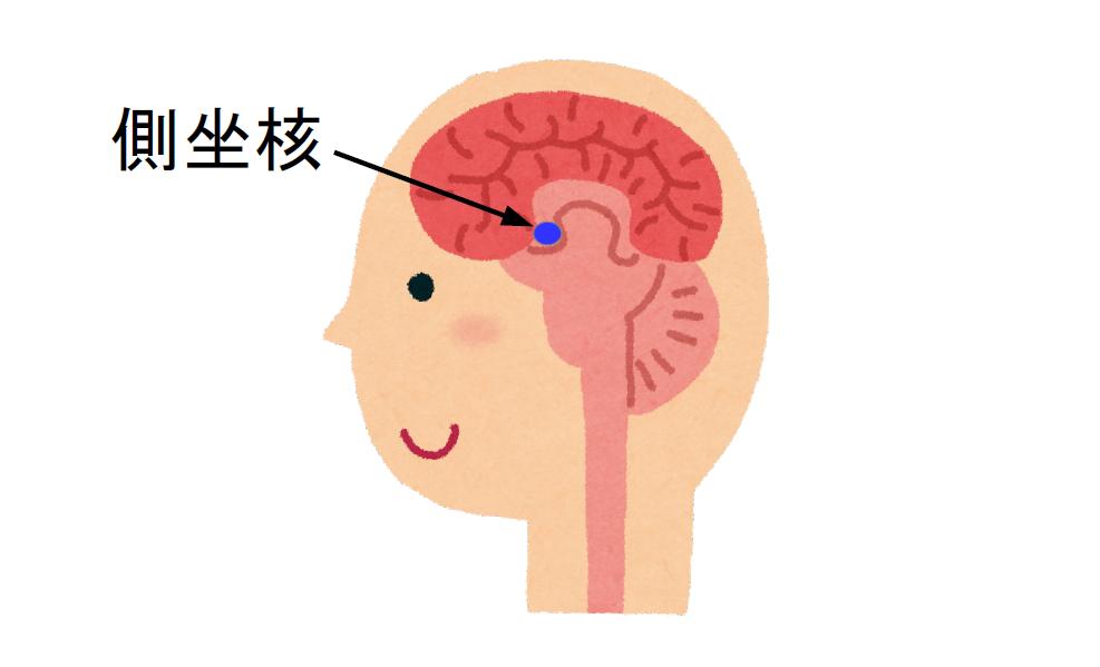 ネガティブとポジティブを生む脳の仕組み|社会人のスマホ学習ブログ